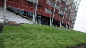 Tysiące roślin wokół Stadionu