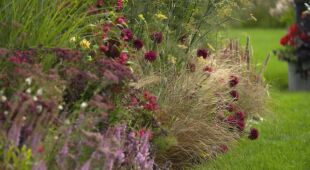 Ogrodowisko – nasza Anglia (odc. 746 / HGTV  odc. 8 serii 2020)