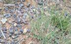 """""""Wilczy pająk"""" znaleziony w Australii"""